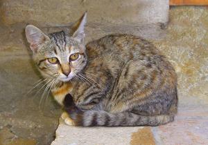 Katzen lieben Erdstrahlen und Wasseradern