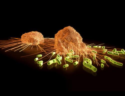 Autoimmunerkrankungen unter Einfluss von Mobilfunkstrahlung?